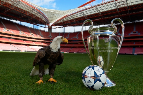 BENFICA EAGLE IMAGE 2