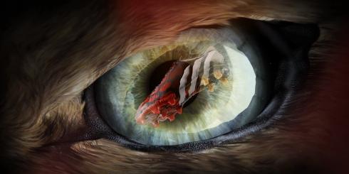 Predator_Instinct_PR_01-1